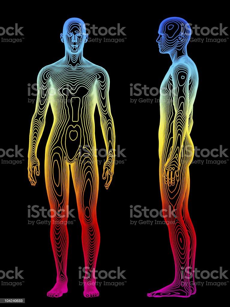Body Analysis royalty-free stock photo