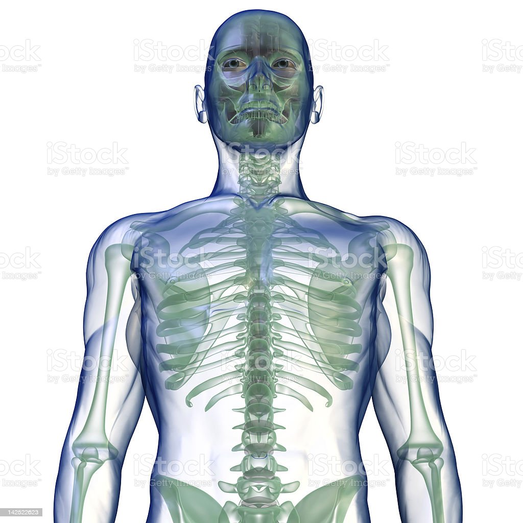 body x-ray from below on white royalty-free stock photo