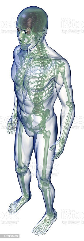 body x-ray perspective from above on white royalty-free stock photo