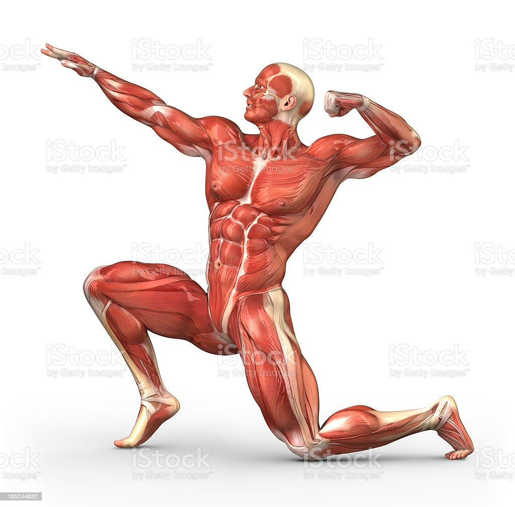 Body-builder with visible muscles stock photo