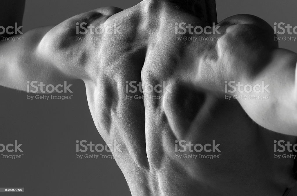 bodybuilder's back royalty-free stock photo