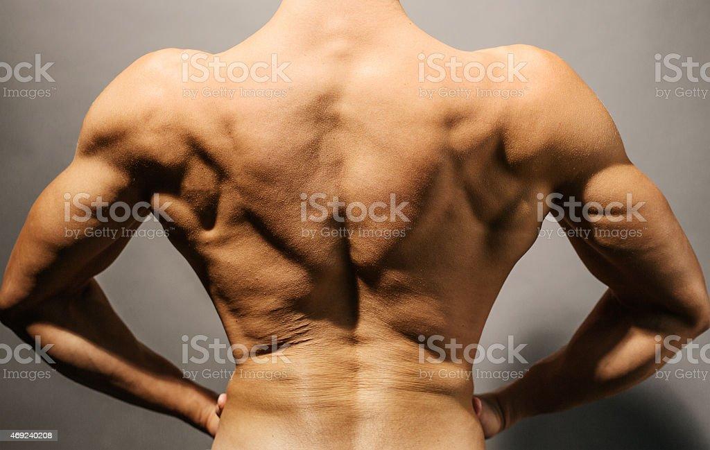 Bodybuilder's back stock photo