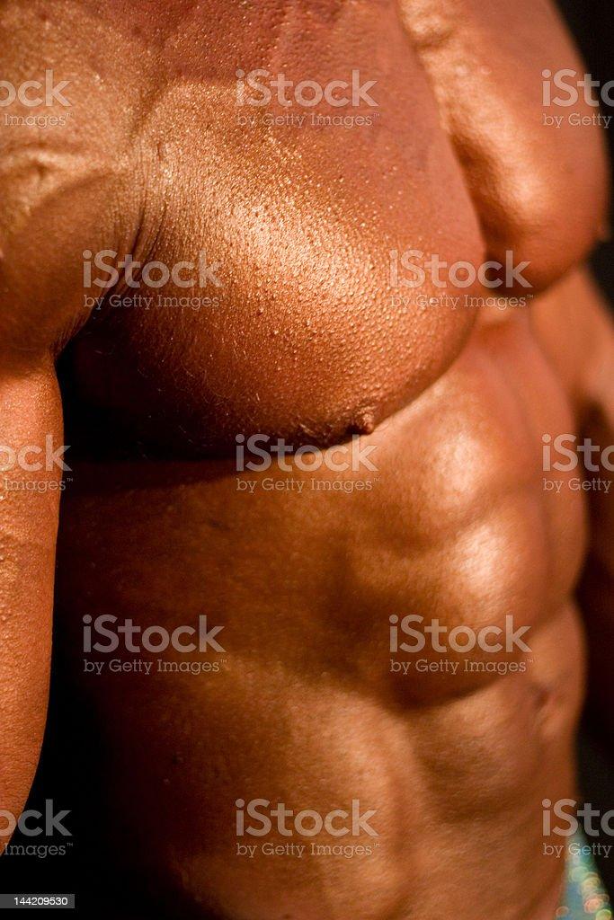 body-builder's body royalty-free stock photo
