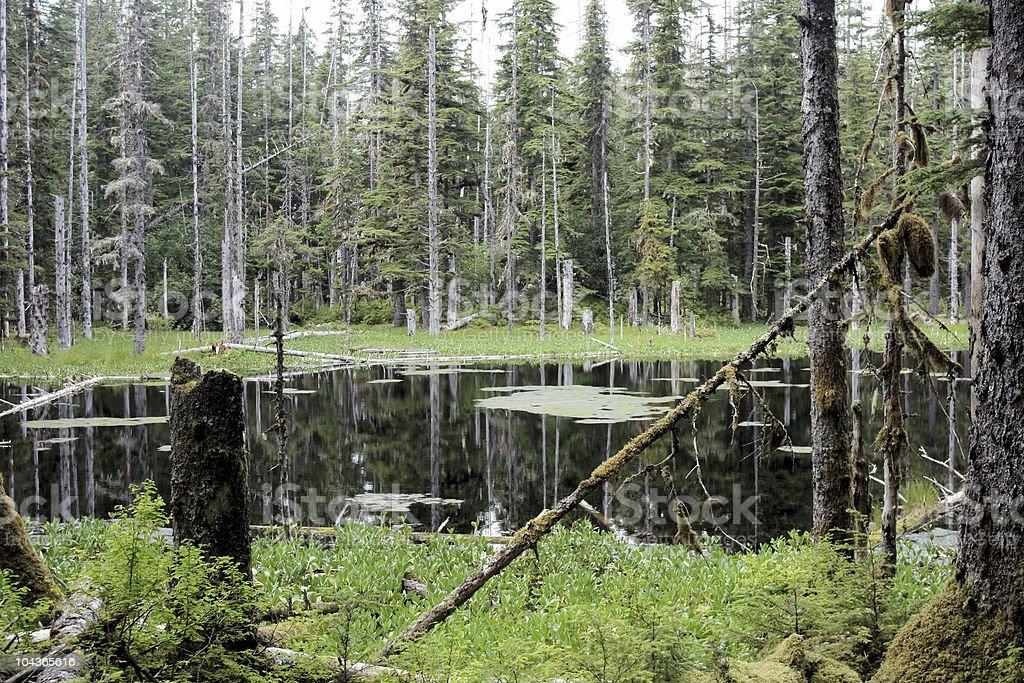 Bog in Glacier Bay National Park royalty-free stock photo