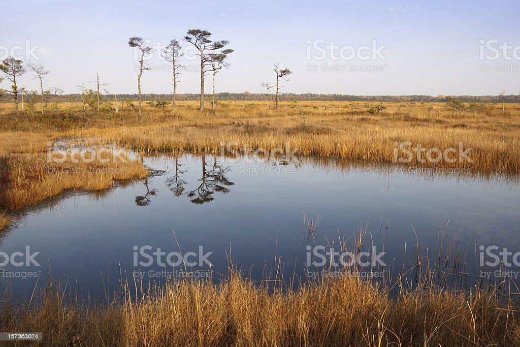 Bog in sunny autumn day stock photo