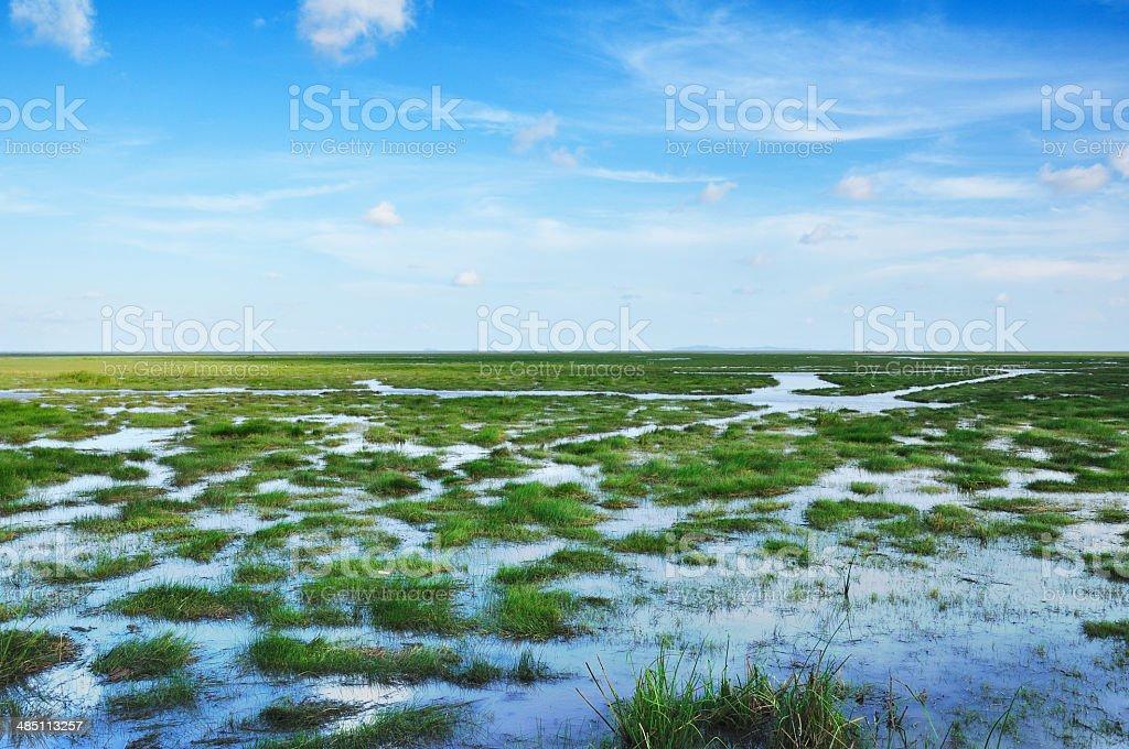 Bog in Thailand stock photo