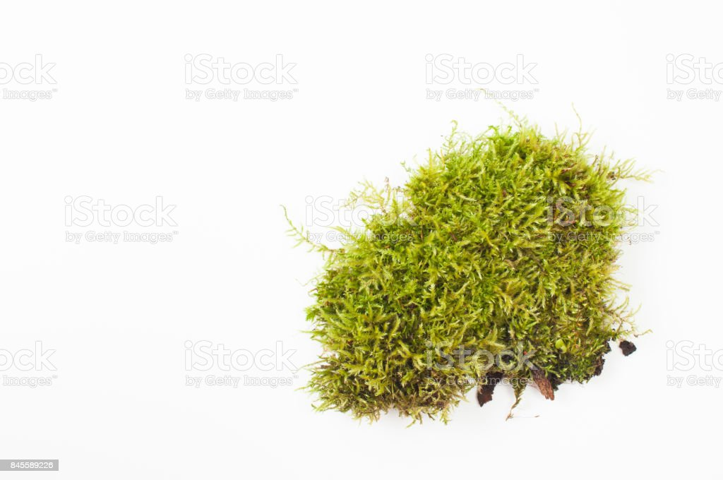 Bog moss hummocks on a white background. Place for text. stock photo