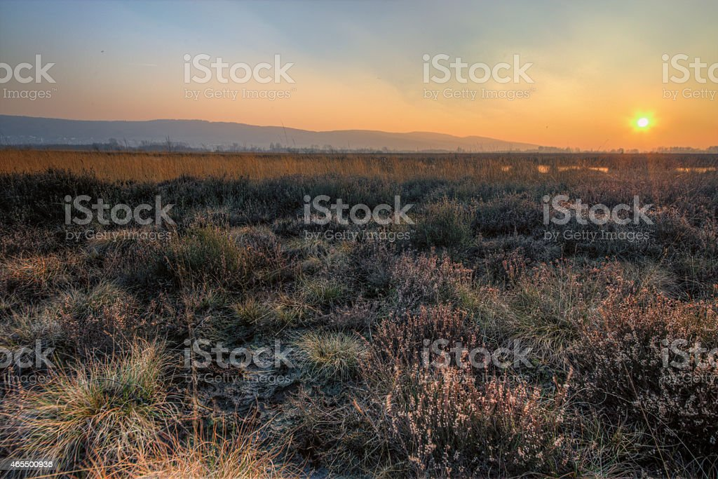 Bog stock photo