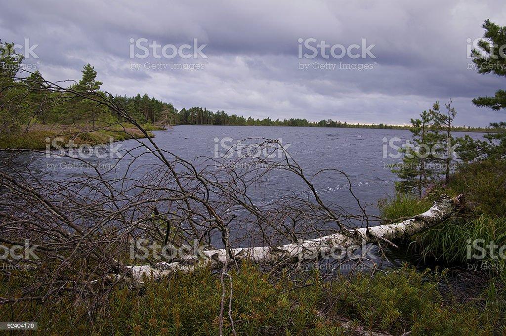 boggy landscape royalty-free stock photo