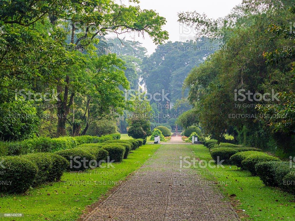 Bogor Botanical Gardens stock photo