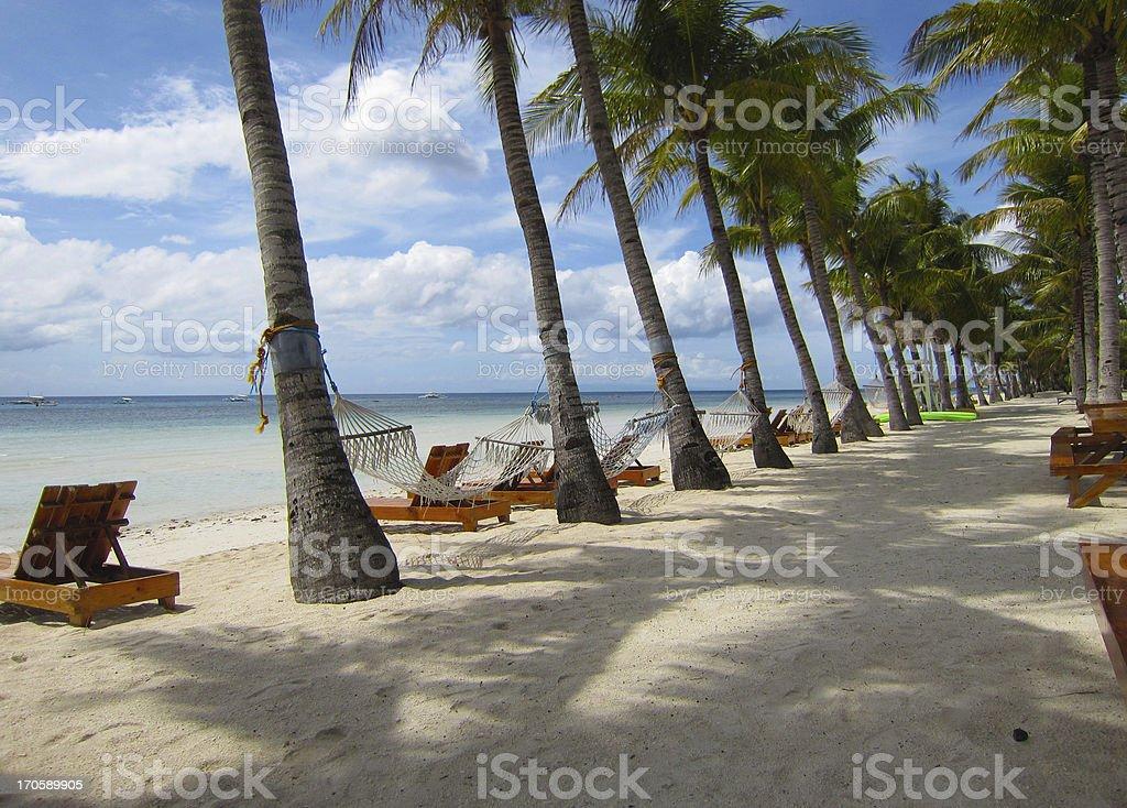 Bohol Beach Coconut Tree Path royalty-free stock photo