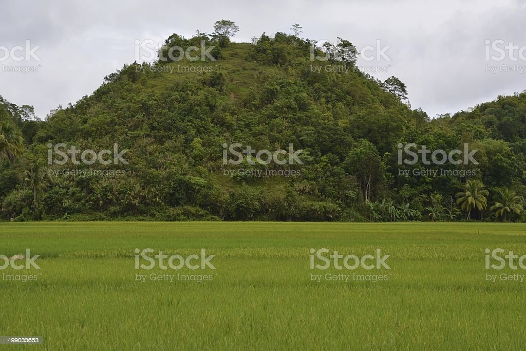 Bohol island green landscape, Philippines stock photo