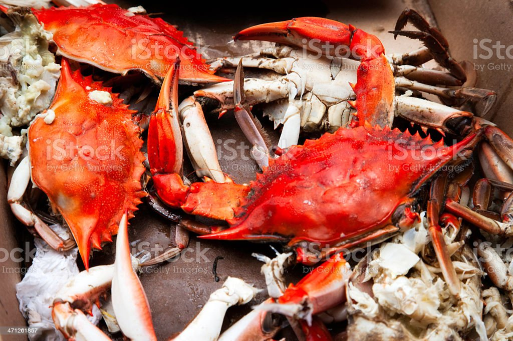 Boiled Blue Crabs in Cardboard Box stock photo