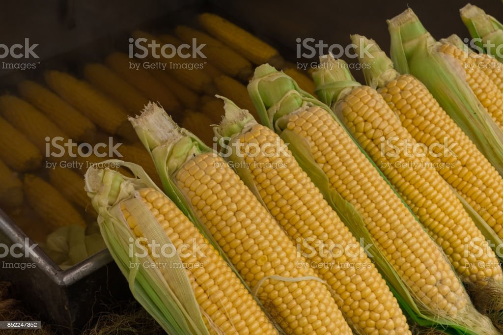 boiled corn, corn, maize, snack, street tastes, stock photo