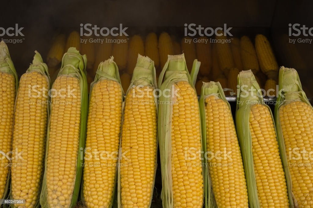boiled corn, corn, maize, snack, street tastes, stock photo