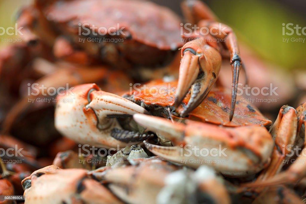 boiled crab closeup stock photo