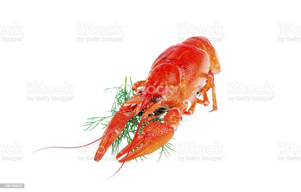 Boiled Crawfish royalty-free stock photo