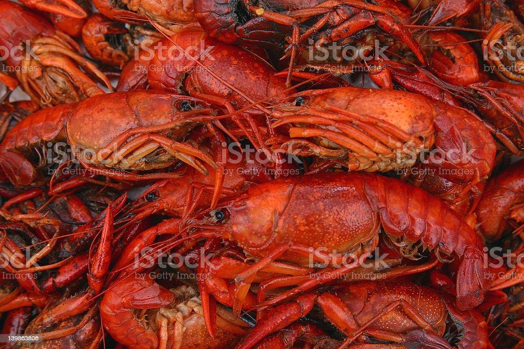 Boiled Crawfish Up Close royalty-free stock photo