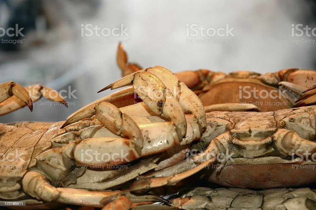 Boiled Dungeness Crab royalty-free stock photo