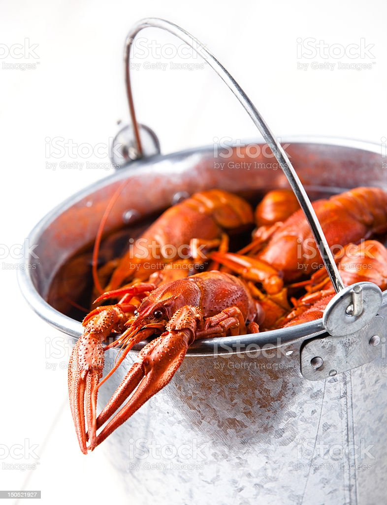 Boiled lobsters in bucket stock photo