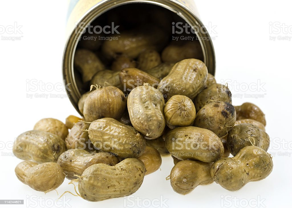Boiled Peanuts coming out of the can royalty-free stock photo