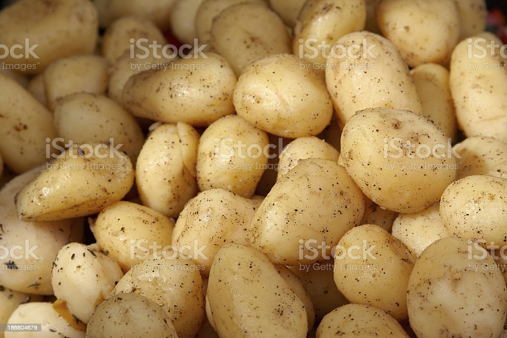 boiled potatoes royalty-free stock photo