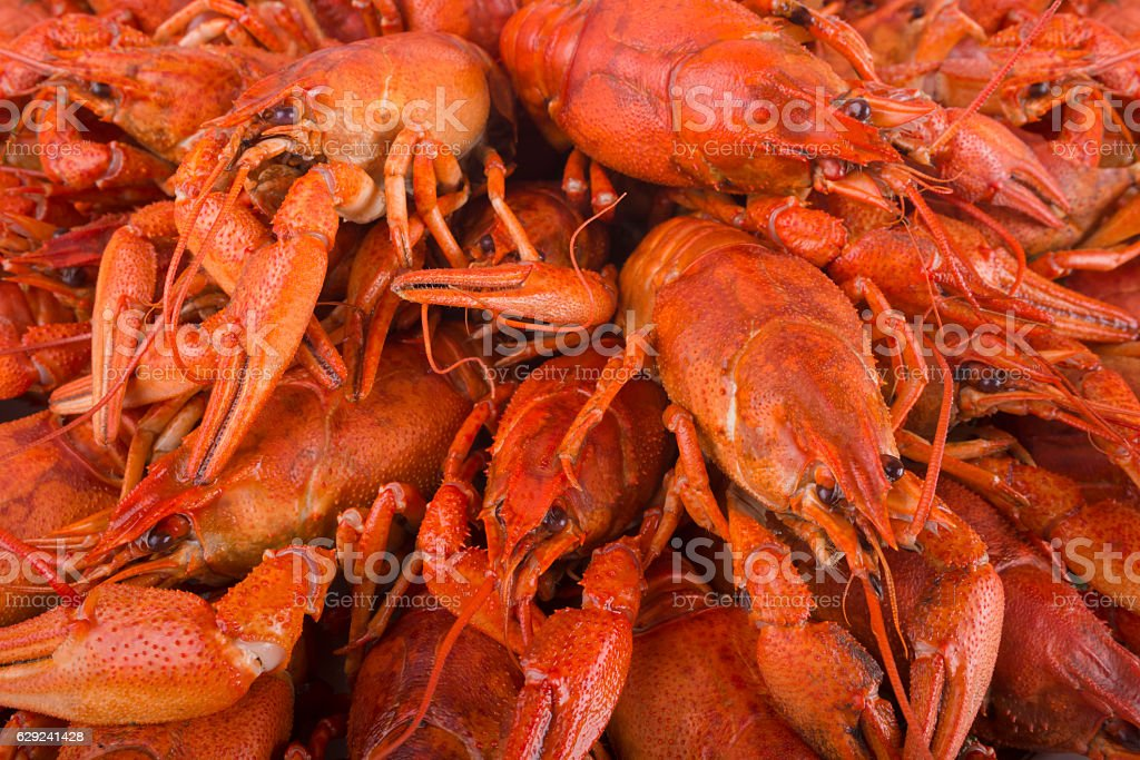 Boiled red crayfish. stock photo
