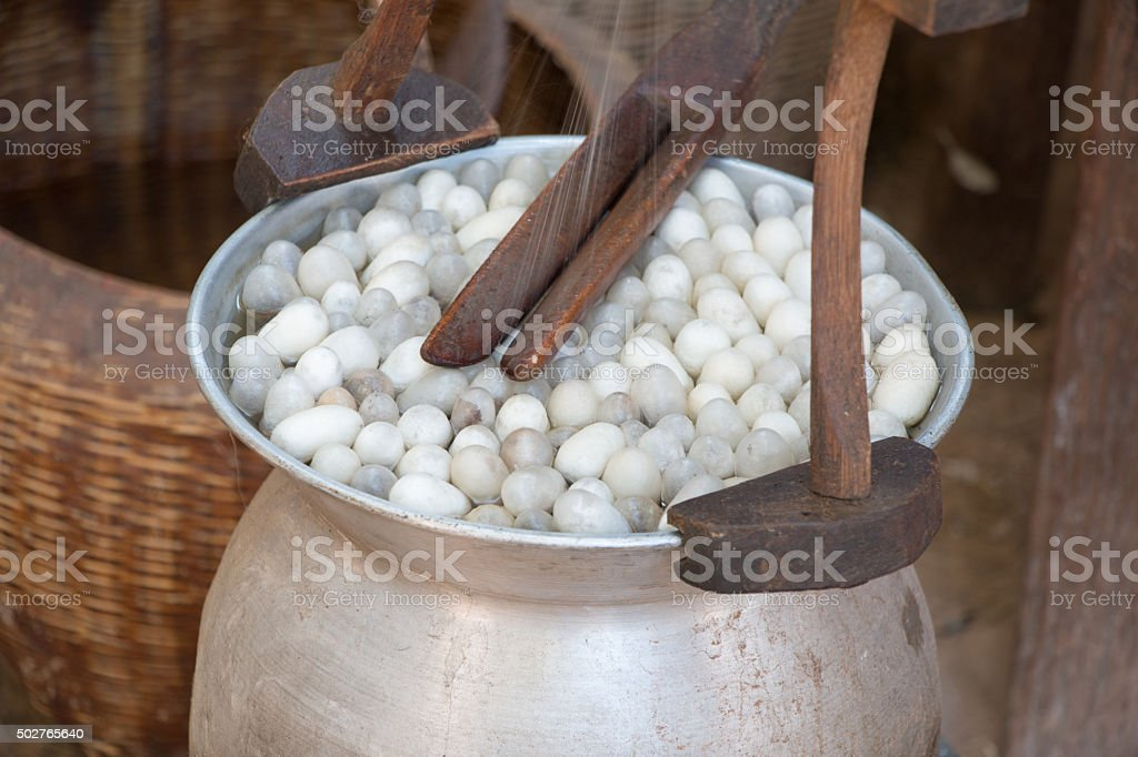 Boiling cocoon silkworm stock photo