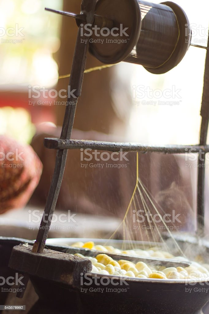 Boiling silkworm cocoon in the pot for process stock photo