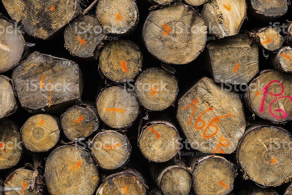 Bois coupé,Bois de construction, Anneau de croissance d'un arbre stock photo