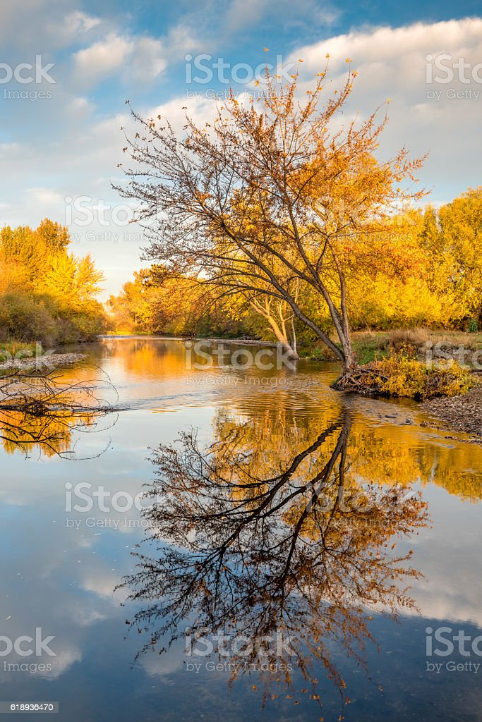Boise River with fall colored trees stock photo