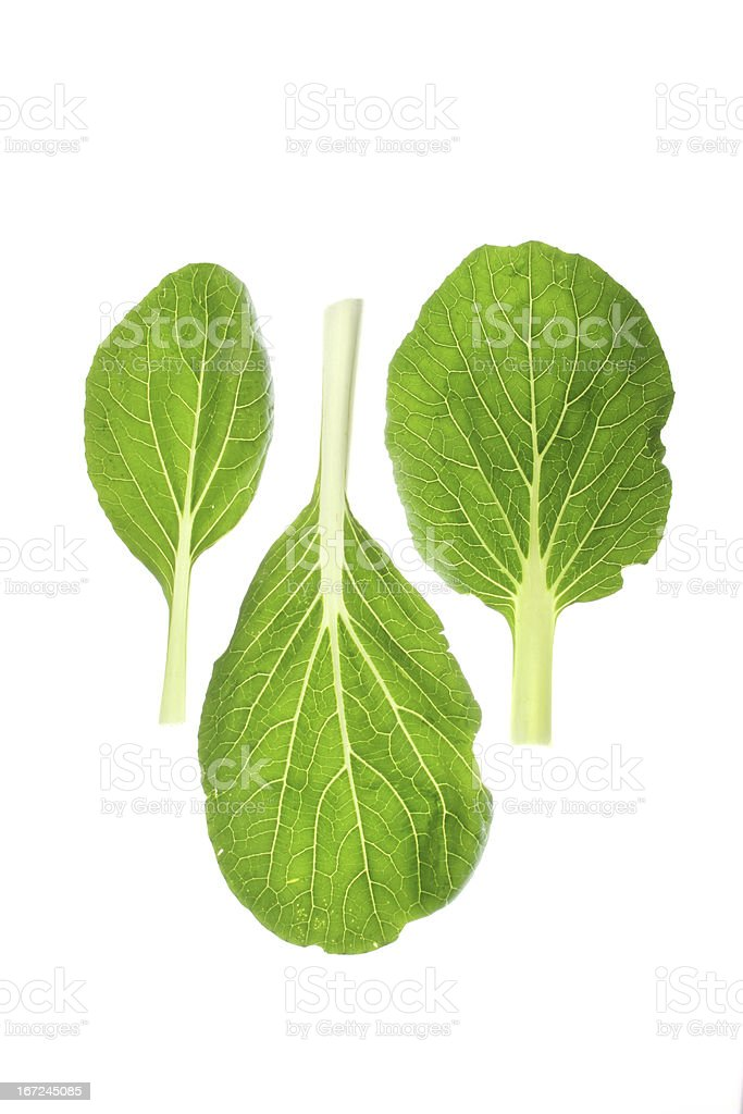 Bok choy leaves stock photo