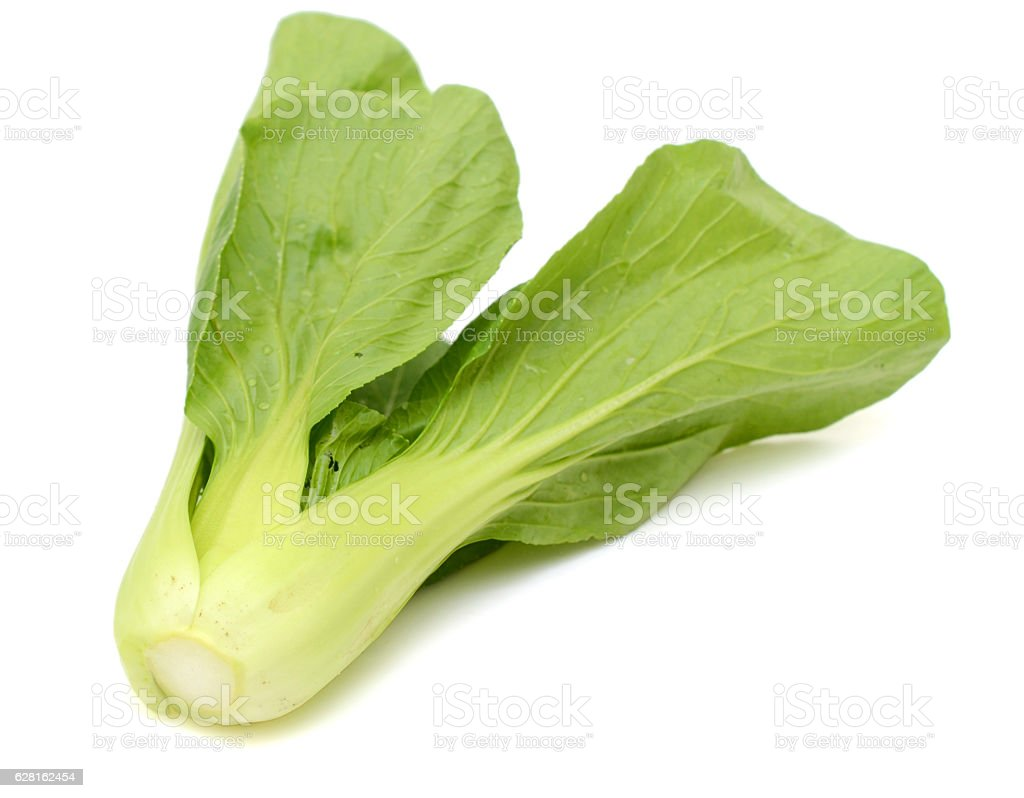 Bok choy vegetable isolated on the white background stock photo