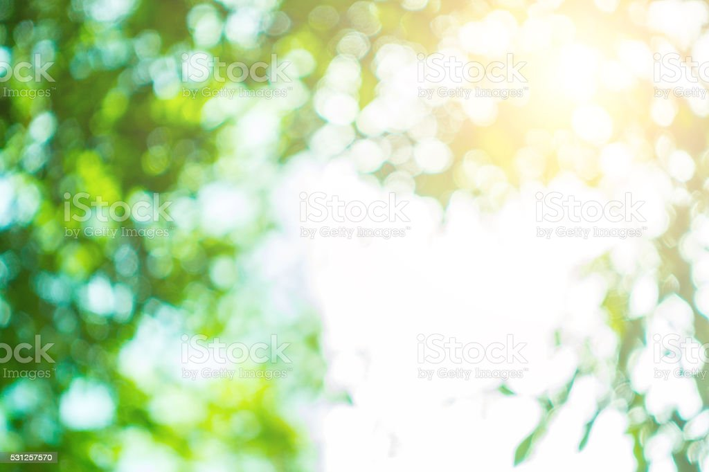 bokeh background from tree stock photo