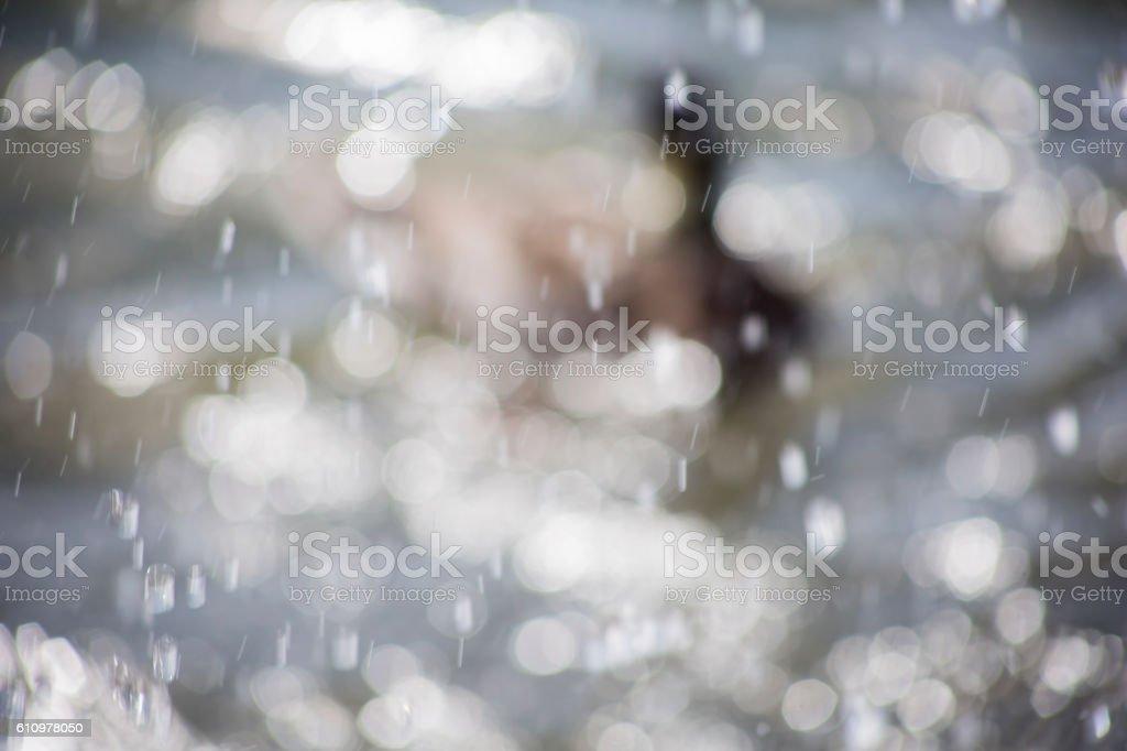 Bokeh duck in water stock photo