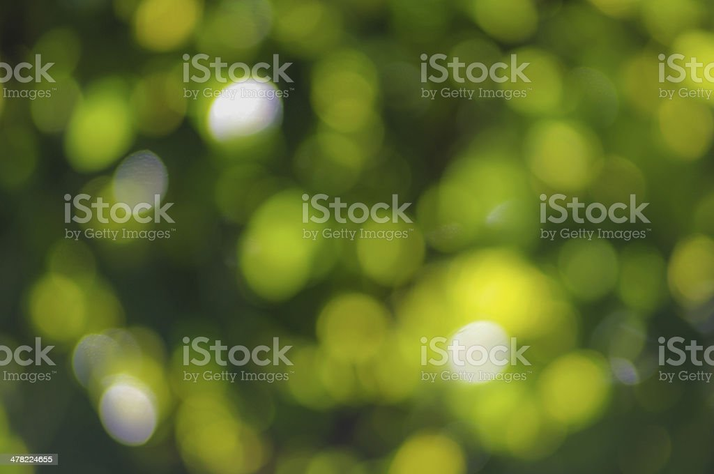 bokeh green nature background royalty-free stock photo