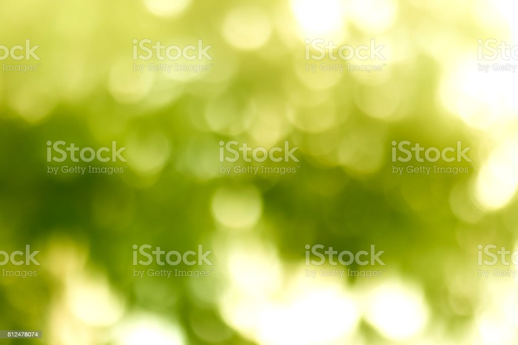 Bokeh in Morning Forest stock photo