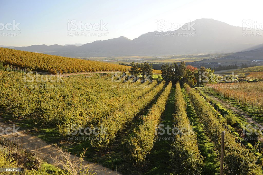 Boland Autumn stock photo