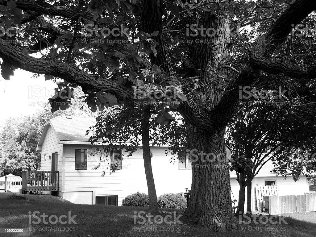 Bold Tree royalty-free stock photo