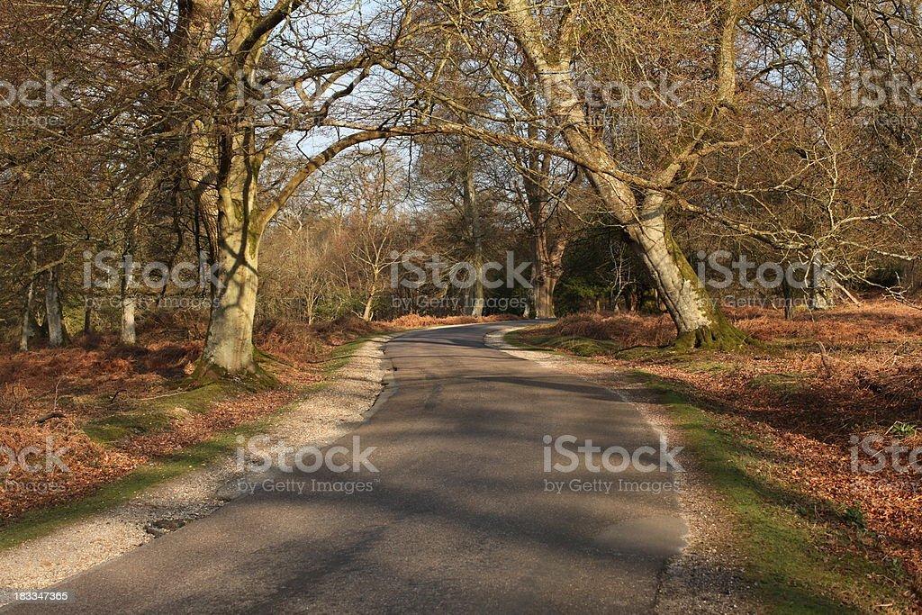 Bolderwood Ornamental Drive Autumn royalty-free stock photo