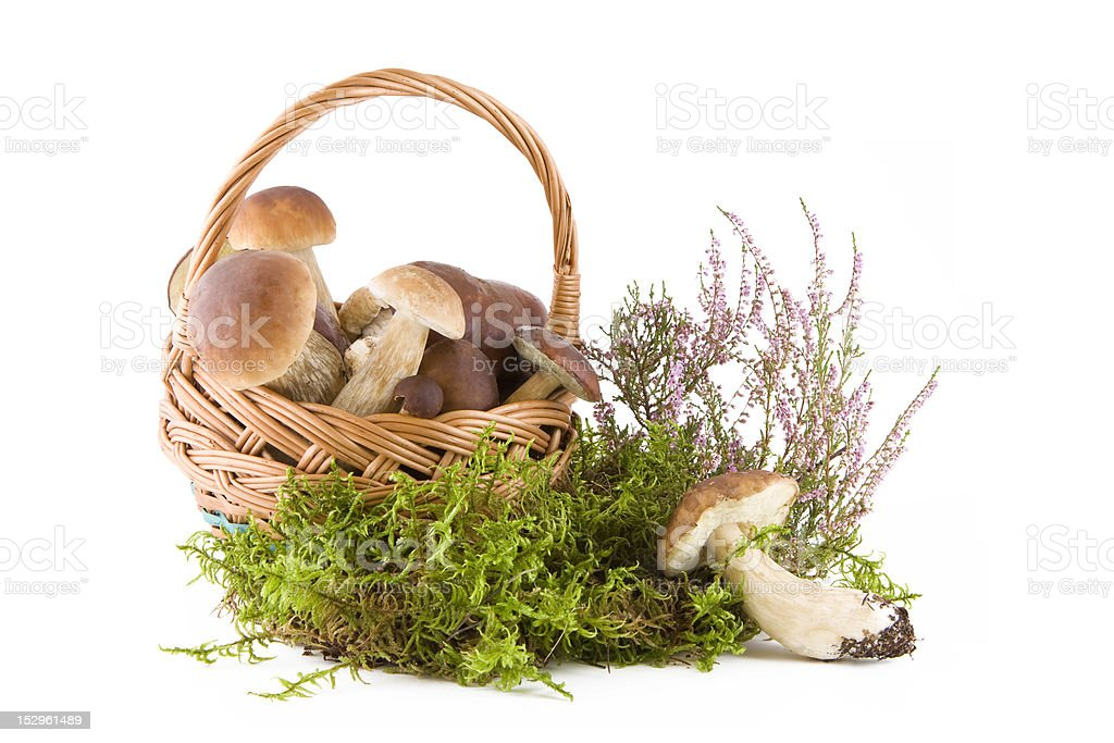 Boletus mushrooms royalty-free stock photo