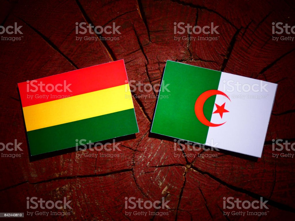 Bolivian flag with Algerian flag on a tree stump isolated stock photo