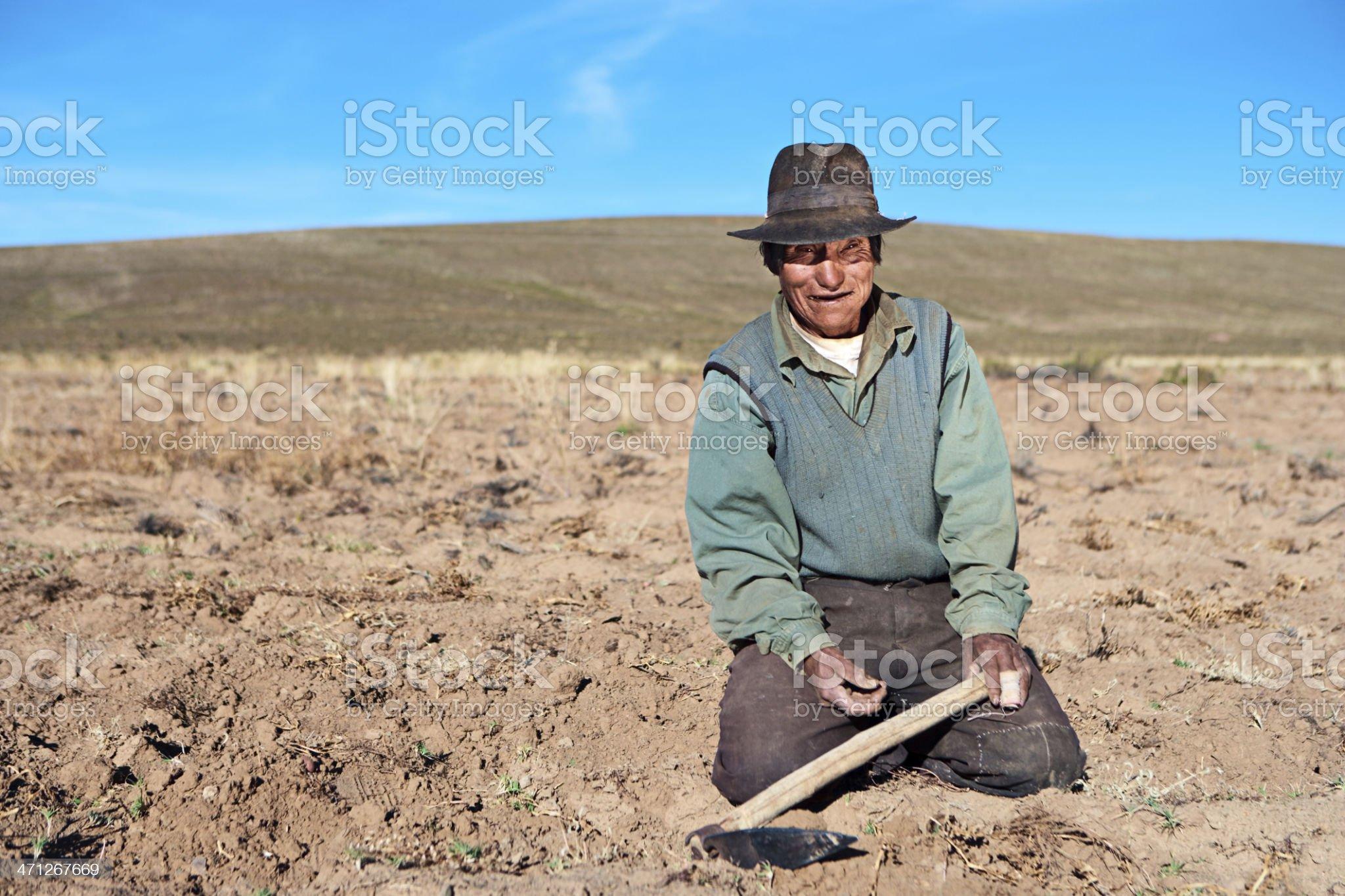 Bolivian man harvesting potatoes near Oruro, Bolivia royalty-free stock photo