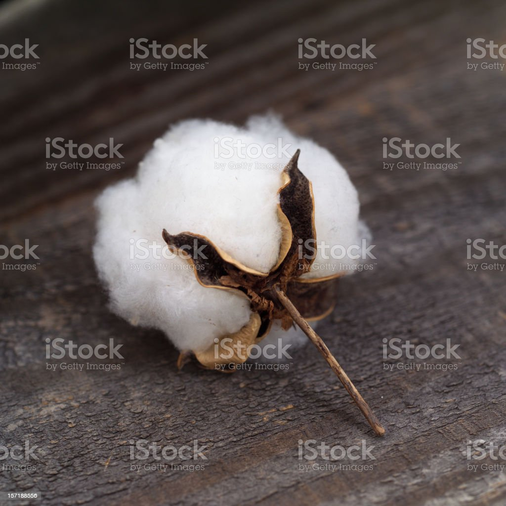 Boll on wood royalty-free stock photo
