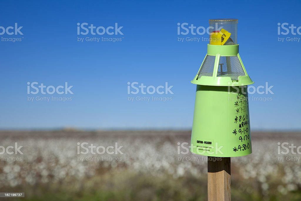 boll weevil trap and cotton field stock photo