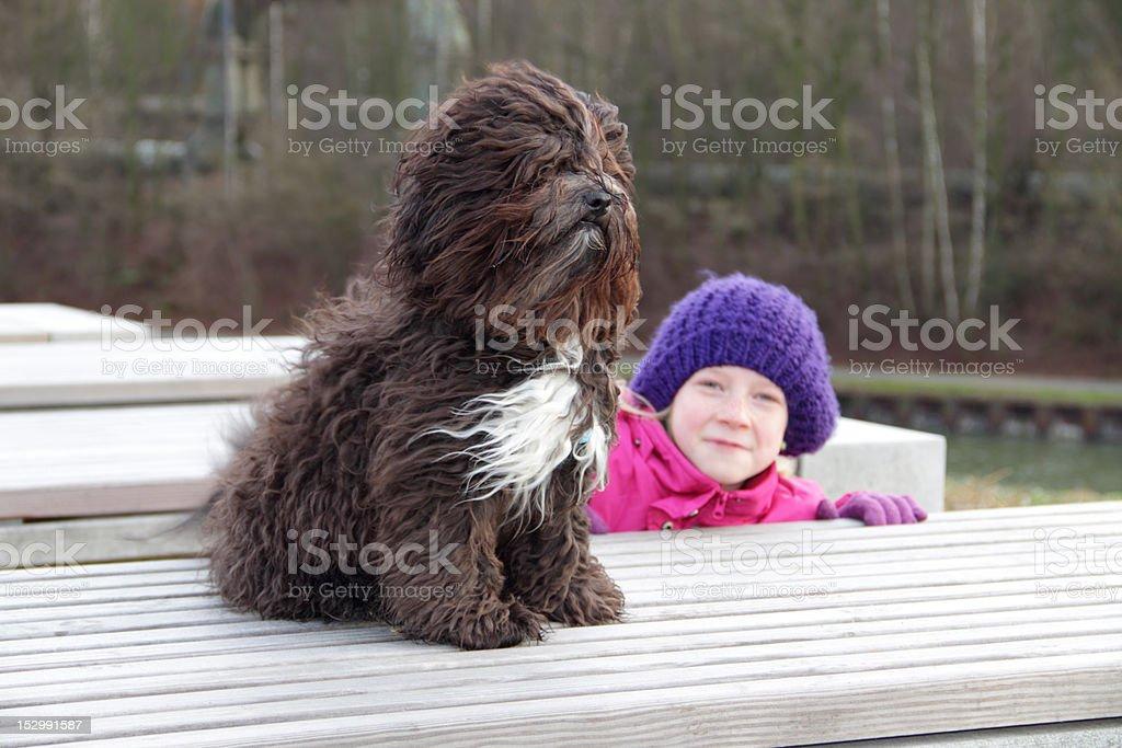 Bolonka Dog in wind stock photo