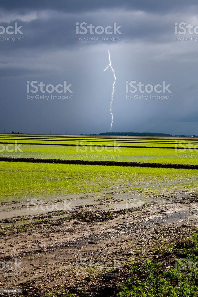 Bolt over Rice royalty-free stock photo