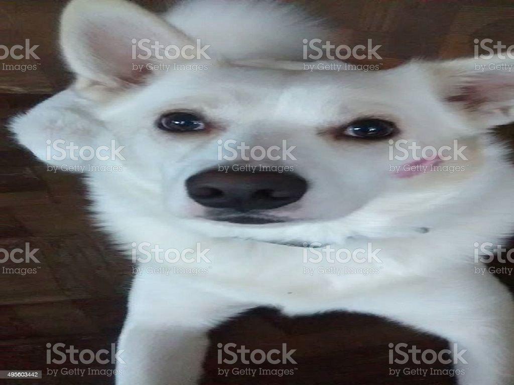 Boulon le chien se baiser photo libre de droits