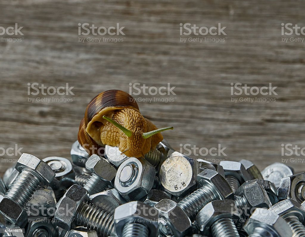 bolts and snail royalty-free stock photo