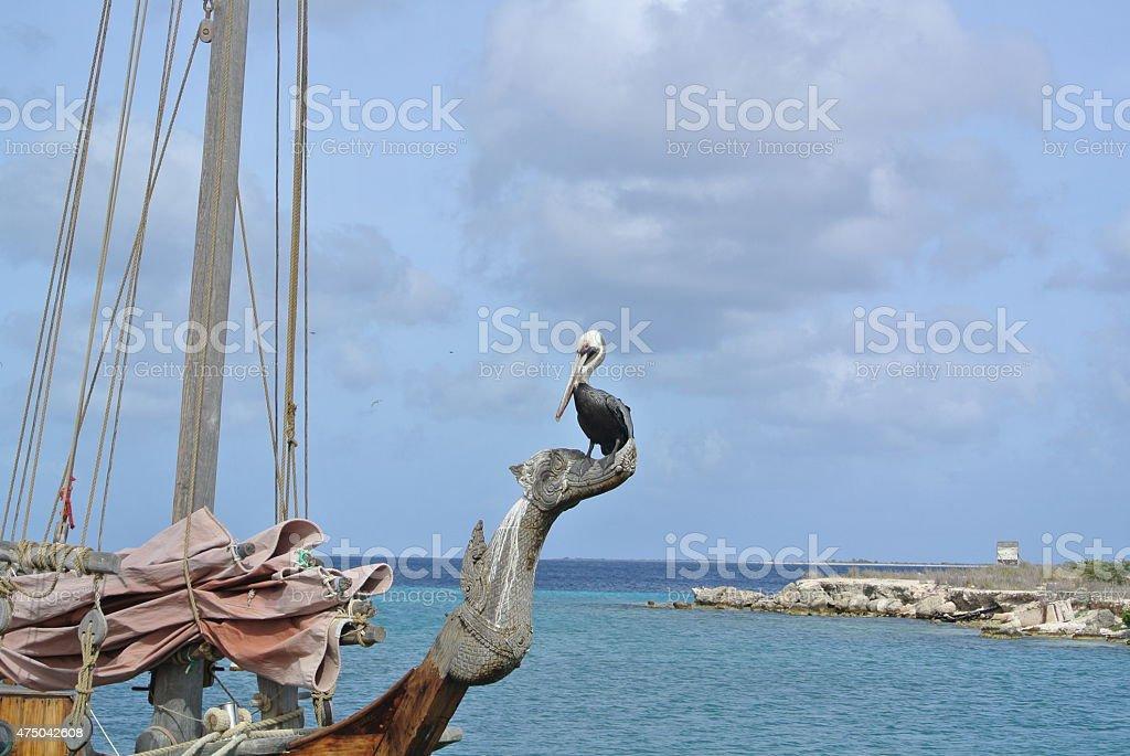 Bonaire Pelican stock photo